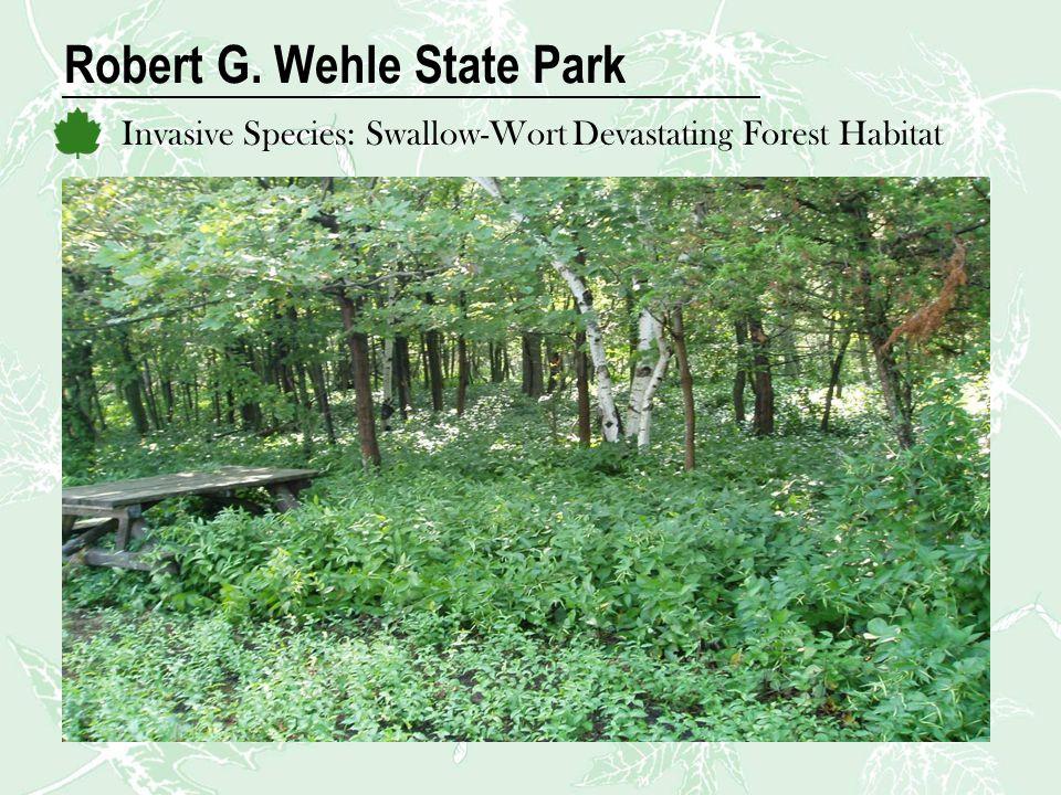 Robert G. Wehle State Park Invasive Species: Swallow-Wort Devastating Forest Habitat
