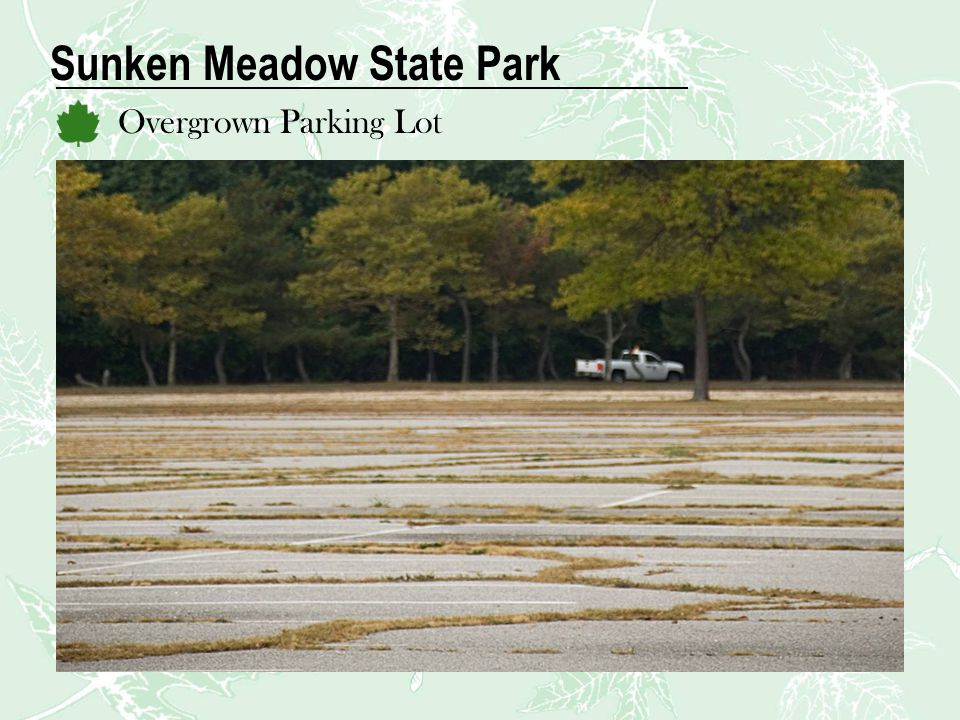 Sunken Meadow State Park Overgrown Parking Lot