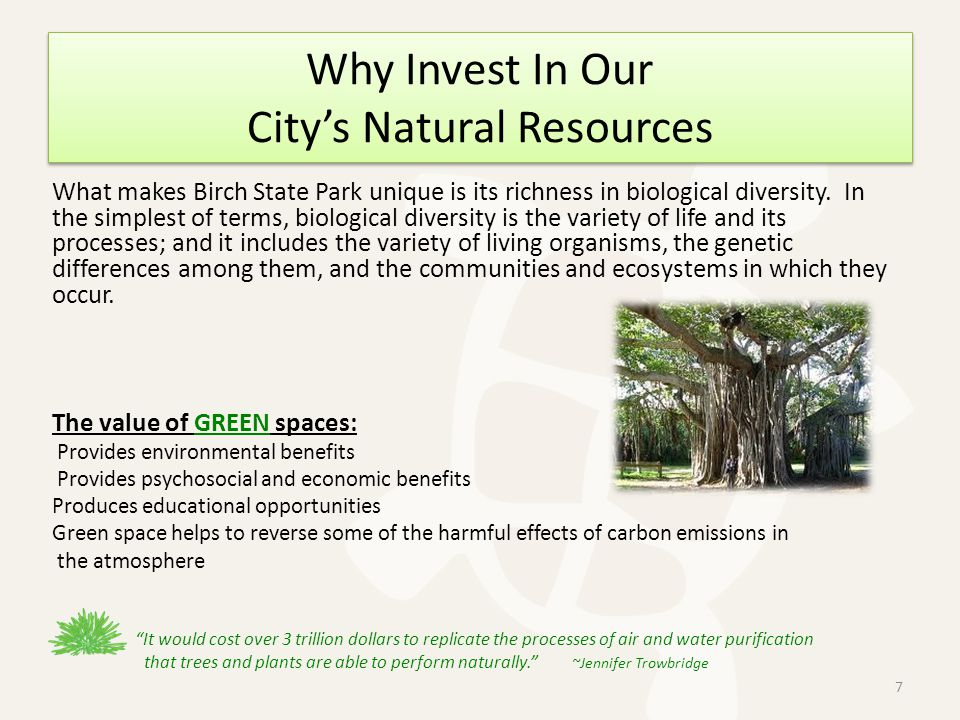 Why Invest In Our Citys Natural Resources What makes Birch State Park unique is its richness in biological diversity.
