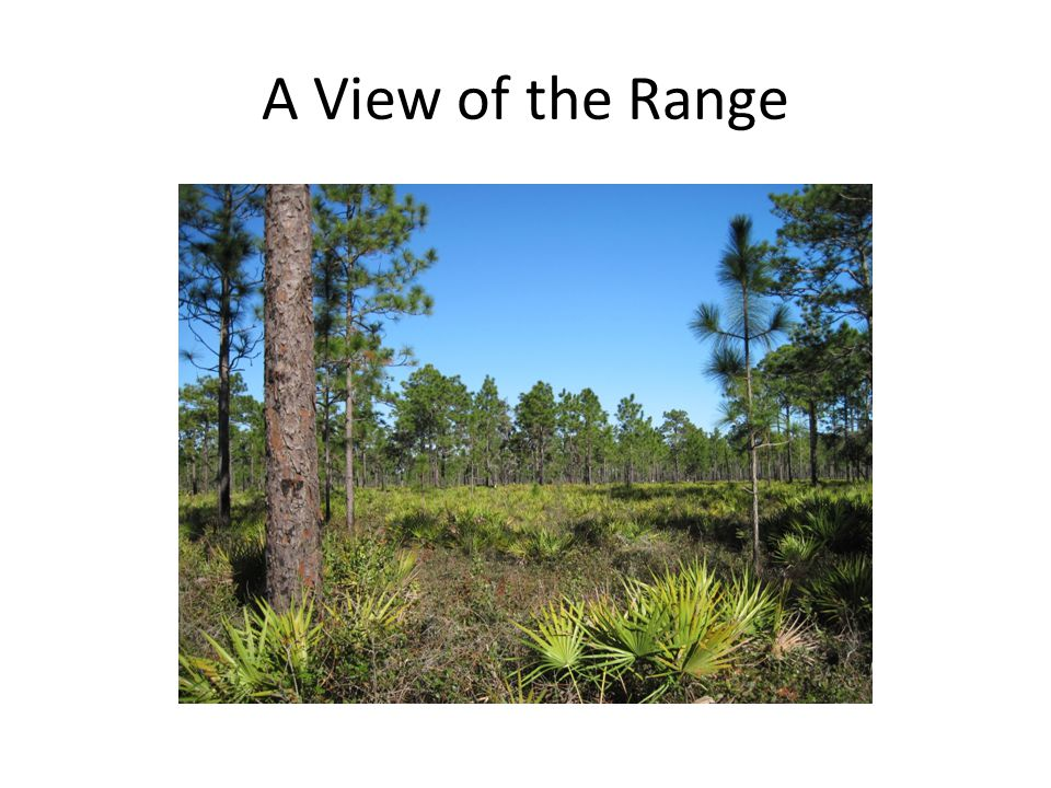A View of the Range
