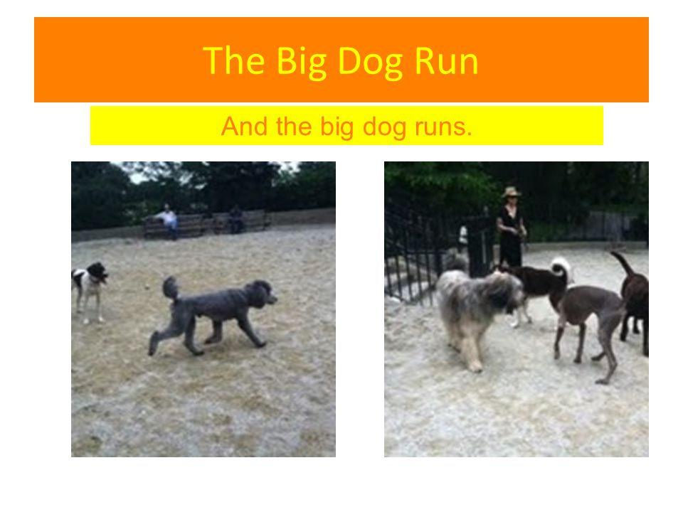 The Big Dog Run And the big dog runs.