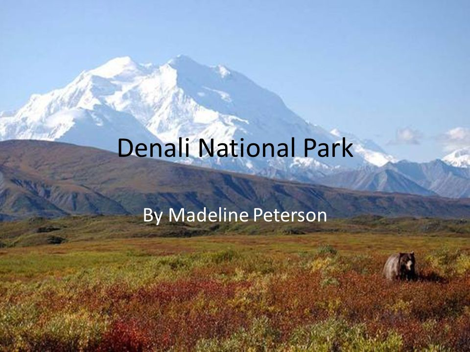 Denali National Park By Madeline Peterson