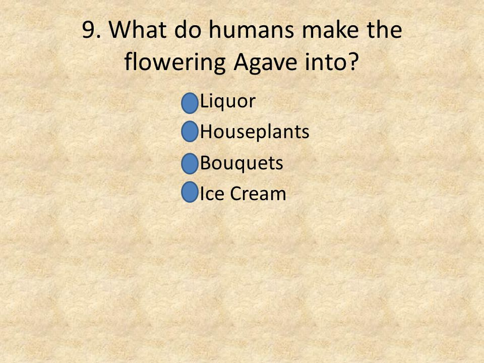 9. What do humans make the flowering Agave into? Liquor Houseplants Bouquets Ice Cream