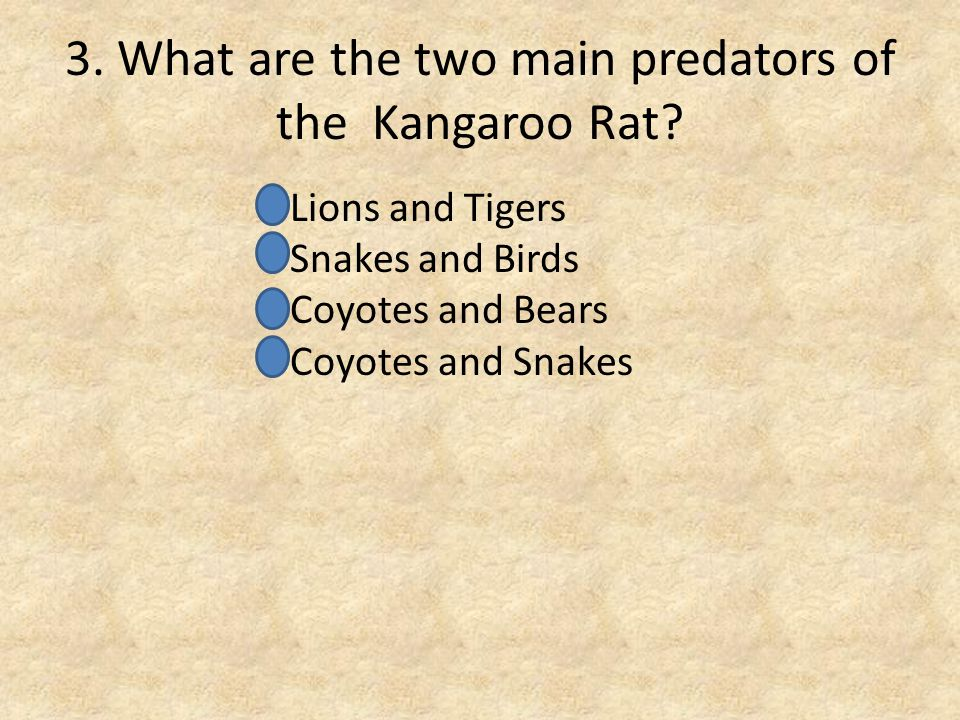 3. What are the two main predators of the Kangaroo Rat.