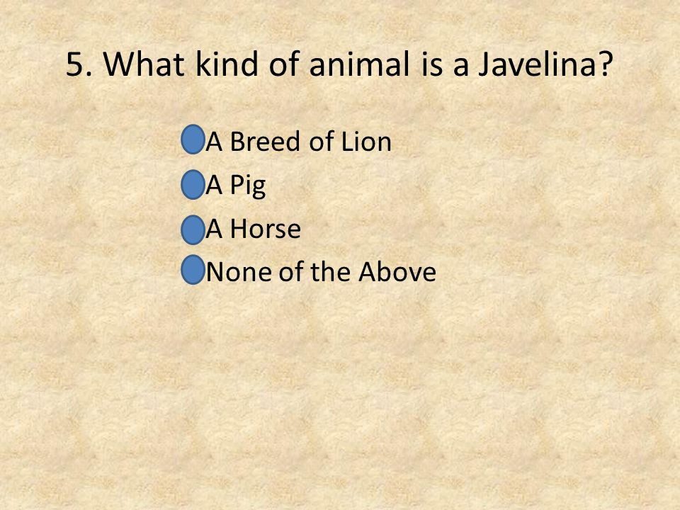 5. What kind of animal is a Javelina? A Breed of Lion A Pig A Horse None of the Above