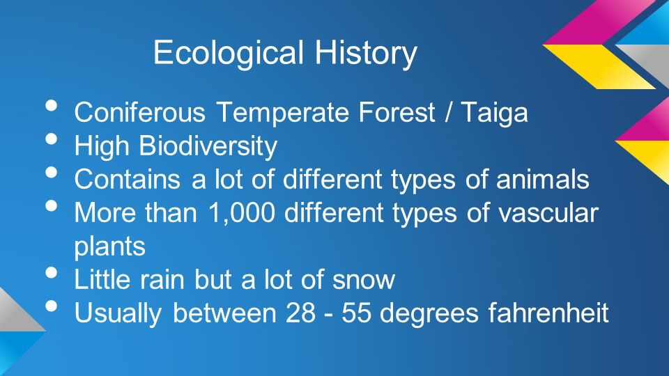 Ecological History Coniferous Temperate Forest / Taiga High Biodiversity Contains a lot of different types of animals More than 1,000 different types of vascular plants Little rain but a lot of snow Usually between 28 - 55 degrees fahrenheit