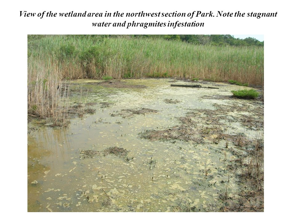 View of the wetland area in the northwest section of Park.