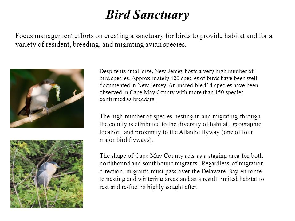 Bird Sanctuary Despite its small size, New Jersey hosts a very high number of bird species.