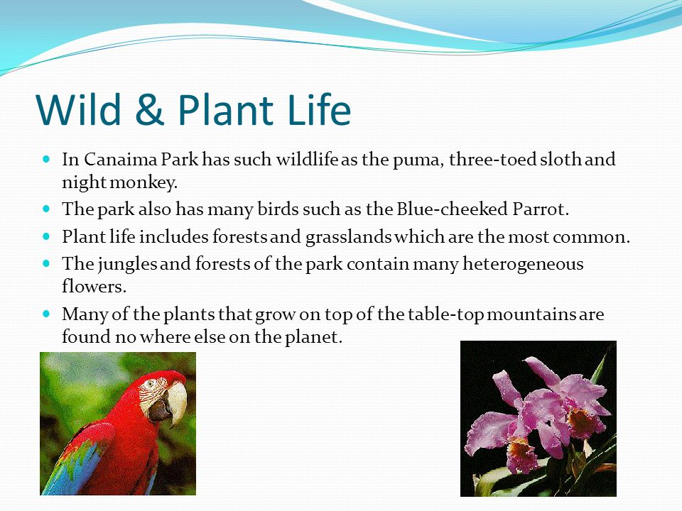 Wild & Plant Life In Canaima Park has such wildlife as the puma, three-toed sloth and night monkey. The park also has many birds such as the Blue-chee