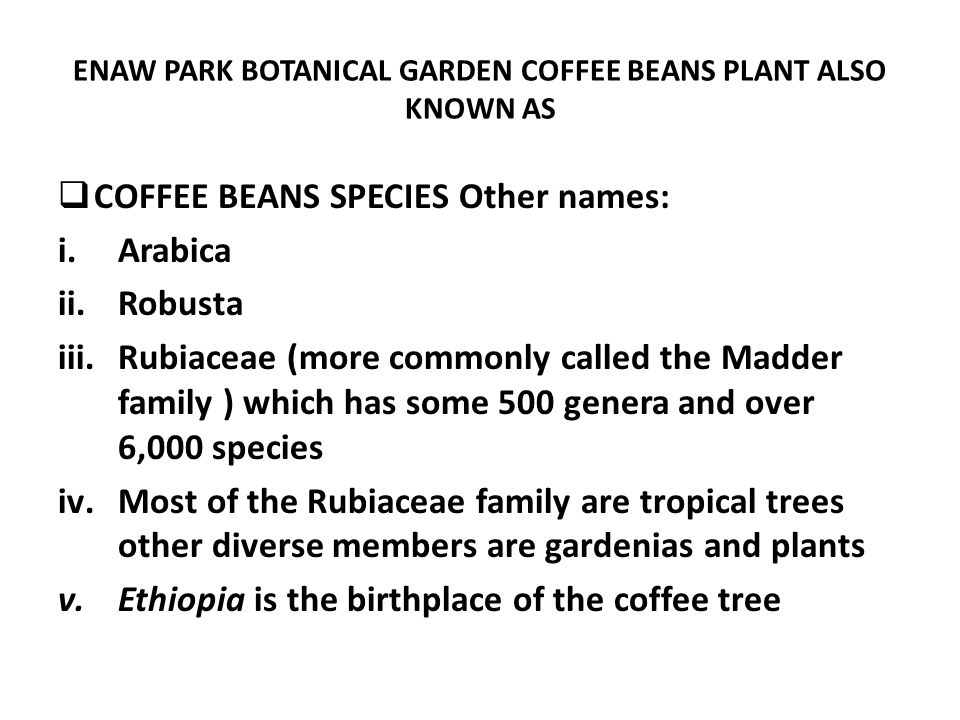 ENAW PARK BOTANICAL GARDEN COFFEE BEANS PLANT ALSO KNOWN AS COFFEE BEANS SPECIES Other names: i.Arabica ii.Robusta iii.Rubiaceae (more commonly called the Madder family ) which has some 500 genera and over 6,000 species iv.Most of the Rubiaceae family are tropical trees other diverse members are gardenias and plants v.Ethiopia is the birthplace of the coffee tree