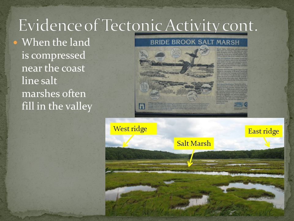 When the land is compressed near the coast line salt marshes often fill in the valley West ridge East ridge Salt Marsh