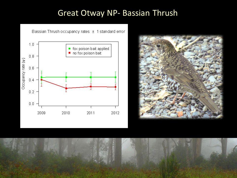 Great Otway NP- Bassian Thrush