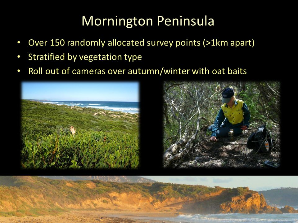 Mornington Peninsula Over 150 randomly allocated survey points (>1km apart) Stratified by vegetation type Roll out of cameras over autumn/winter with oat baits