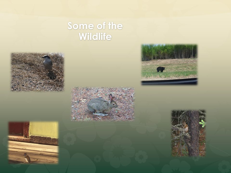 Some of the Wildlife