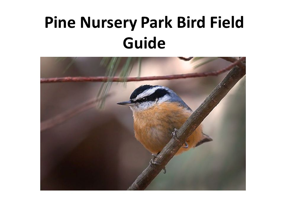 Contents 1.Swans, Geese and Ducks 2.Game Birds 3.Vultures and Diurnal Raptors 4.Shorebirds 5.Pigeons and Doves 6.Owls 7.Hummingbirds 8.Woodpeckers 9.Jays, Crows and Ravens 10.Swallows 11.Chickadees 12.Nuthatches 13.Thrushes 14.Sparrows 15.Blackbirds 16.Finches and Old World Sparrows