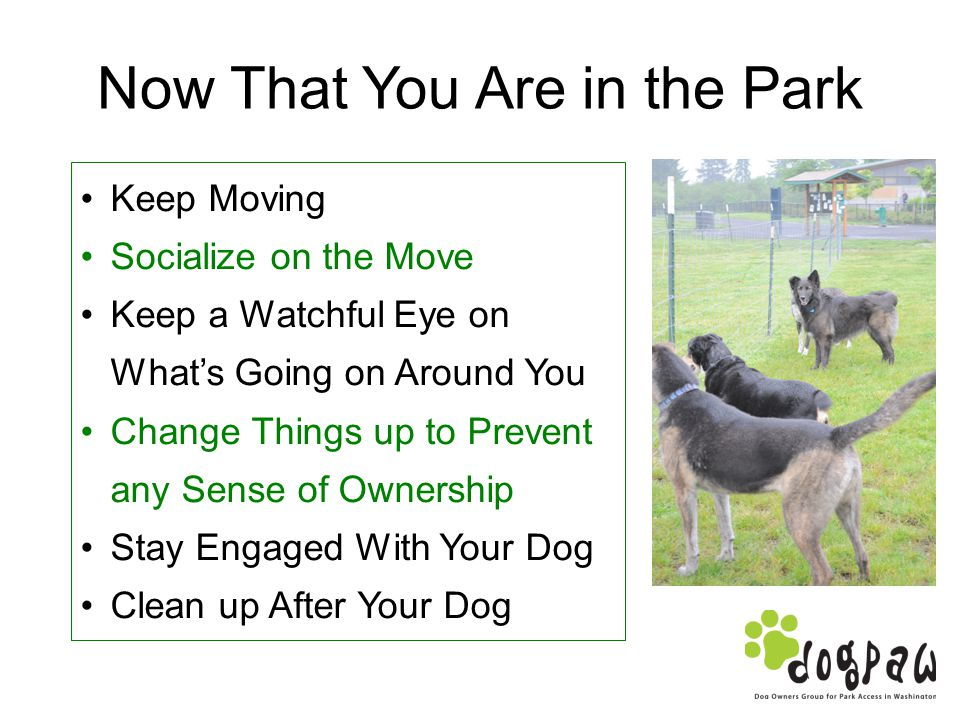Now That You Are in the Park Keep Moving Socialize on the Move Keep a Watchful Eye on Whats Going on Around You Change Things up to Prevent any Sense of Ownership Stay Engaged With Your Dog Clean up After Your Dog
