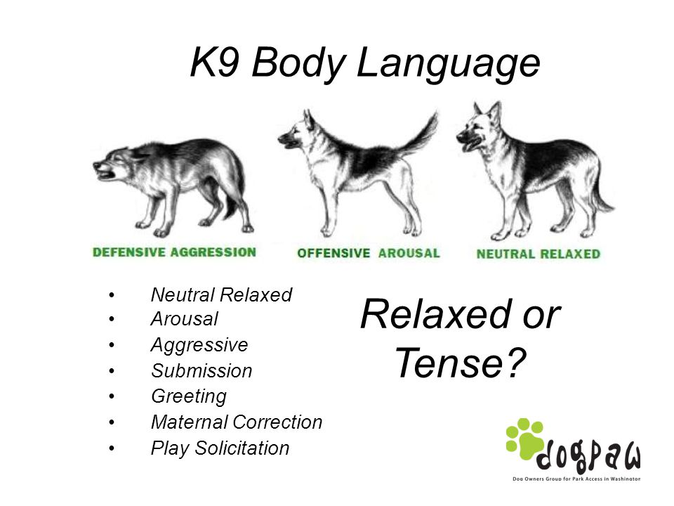 K9 Body Language Neutral Relaxed Arousal Aggressive Submission Greeting Maternal Correction Play Solicitation Relaxed or Tense?