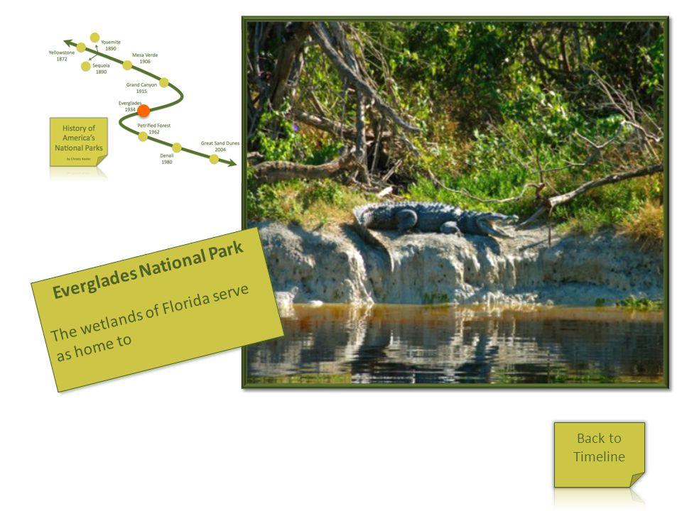 Everglades Everglades National Park The wetlands of Florida serve as home to Everglades National Park The wetlands of Florida serve as home to