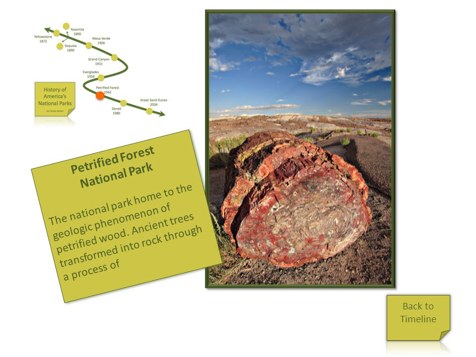 Petrified Forest National Park The national park home to the geologic phenomenon of petrified wood. Ancient trees transformed into rock through a proc