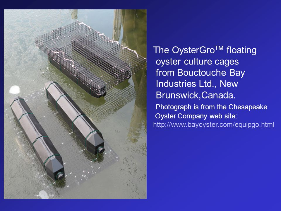 The OysterGro TM floating oyster culture cages from Bouctouche Bay Industries Ltd., New Brunswick,Canada. Photograph is from the Chesapeake Oyster Com