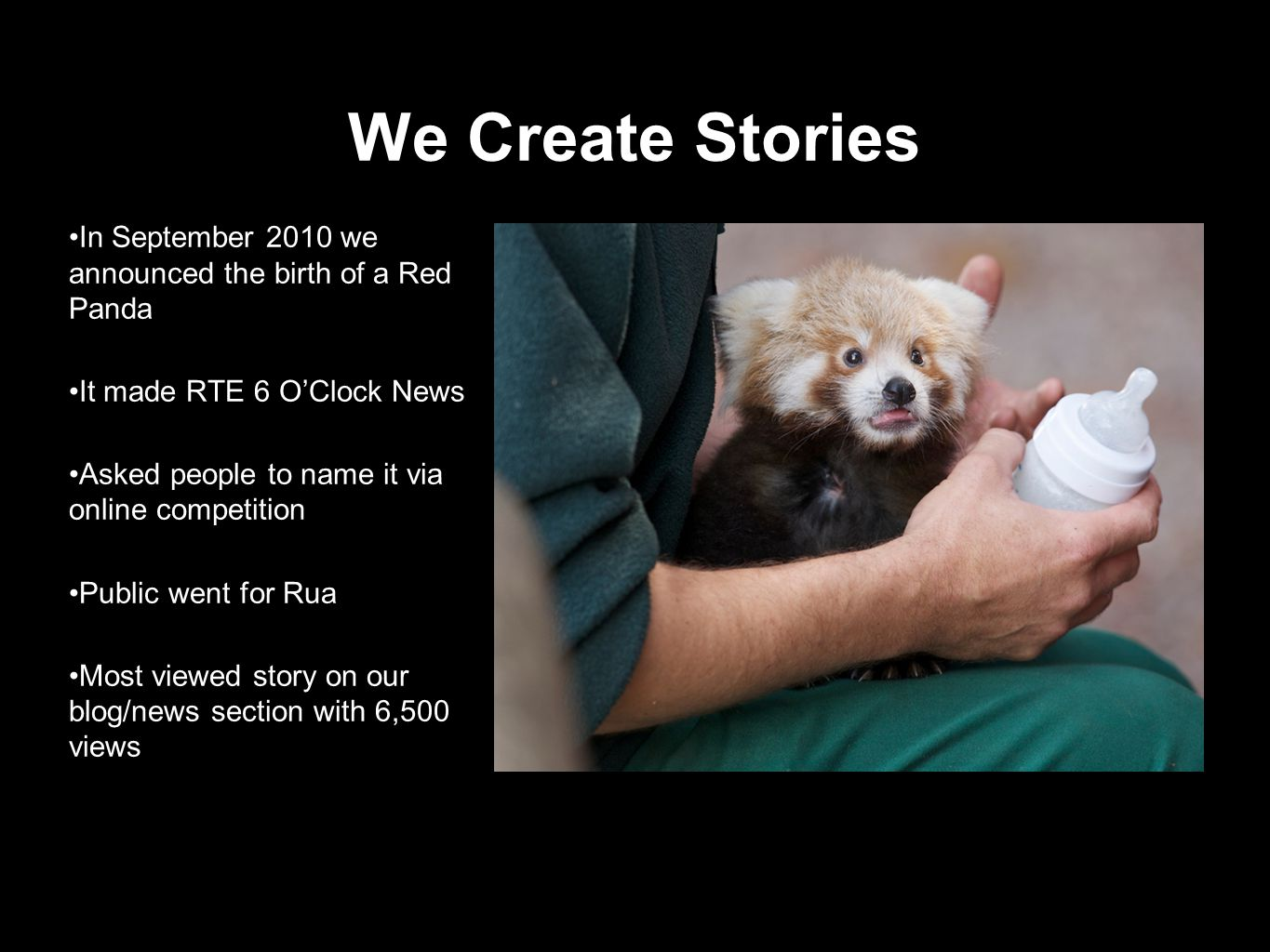 We Create Stories In September 2010 we announced the birth of a Red Panda It made RTE 6 OClock News Asked people to name it via online competition Public went for Rua Most viewed story on our blog/news section with 6,500 views