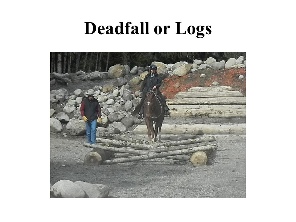 Deadfall or Logs