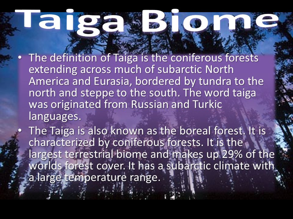 The definition of Taiga is the coniferous forests extending across much of subarctic North America and Eurasia, bordered by tundra to the north and st