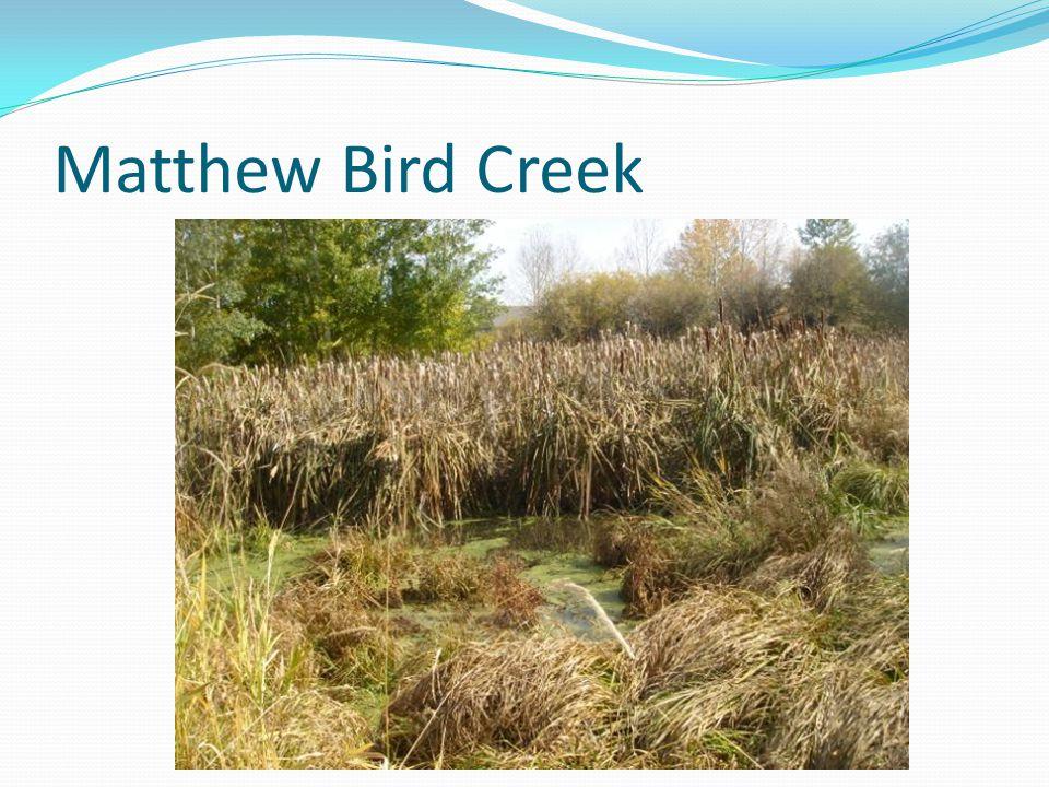 Matthew Bird Creek
