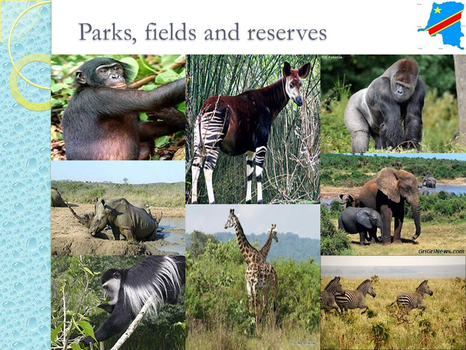 Parks, fields and reserves