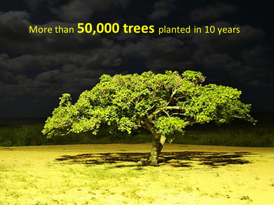 More than 50,000 trees planted in 10 years