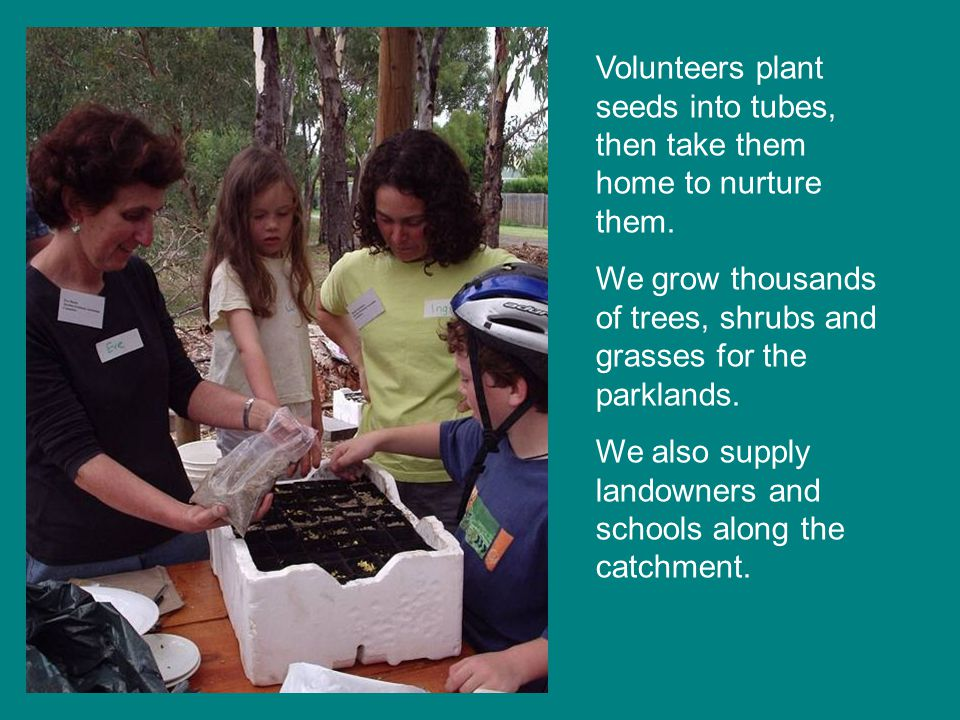Action plan projects include starting a plant nursery….