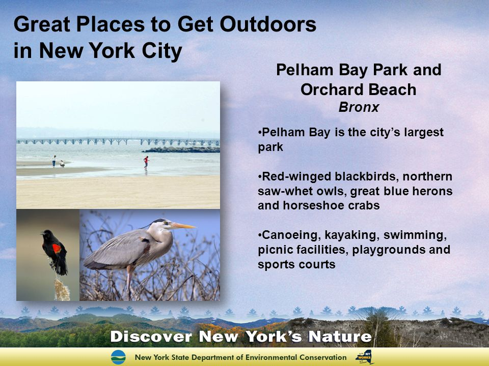 Pelham Bay Park and Orchard Beach Bronx Pelham Bay is the citys largest park Red-winged blackbirds, northern saw-whet owls, great blue herons and horseshoe crabs Canoeing, kayaking, swimming, picnic facilities, playgrounds and sports courts Great Places to Get Outdoors in New York City