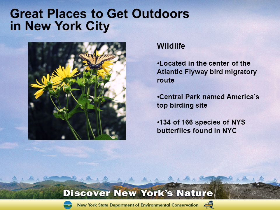 Great Places to Get Outdoors in New York City Wildlife Located in the center of the Atlantic Flyway bird migratory route Central Park named Americas top birding site 134 of 166 species of NYS butterflies found in NYC