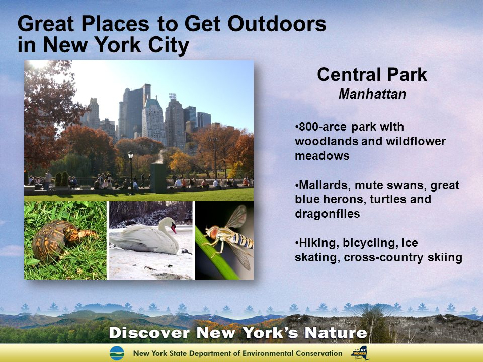 Great Places to Get Outdoors in New York City Central Park Manhattan 800-arce park with woodlands and wildflower meadows Mallards, mute swans, great blue herons, turtles and dragonflies Hiking, bicycling, ice skating, cross-country skiing