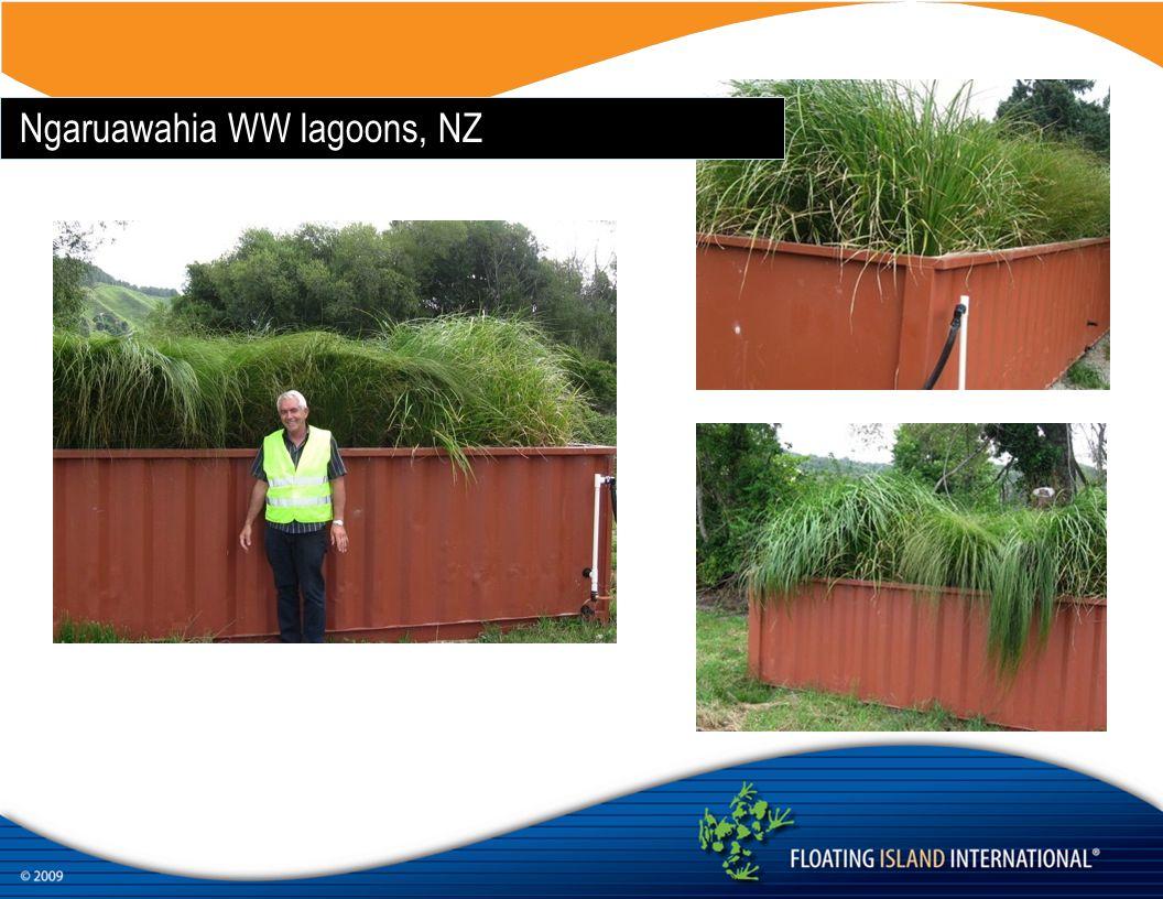 Ngaruawahia WW lagoons, NZ