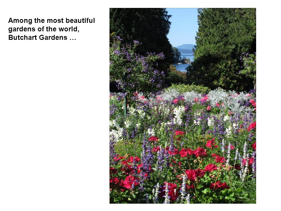 Among the most beautiful gardens of the world, Butchart Gardens …