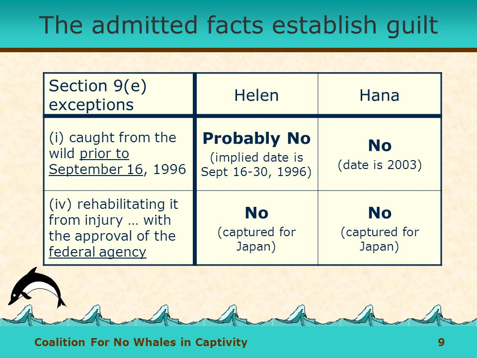 Coalition For No Whales in Captivity 9 The admitted facts establish guilt Section 9(e) exceptions HelenHana (i) caught from the wild prior to September 16, 1996 Probably No (implied date is Sept 16-30, 1996) No (date is 2003) (iv) rehabilitating it from injury … with the approval of the federal agency No (captured for Japan) No (captured for Japan)
