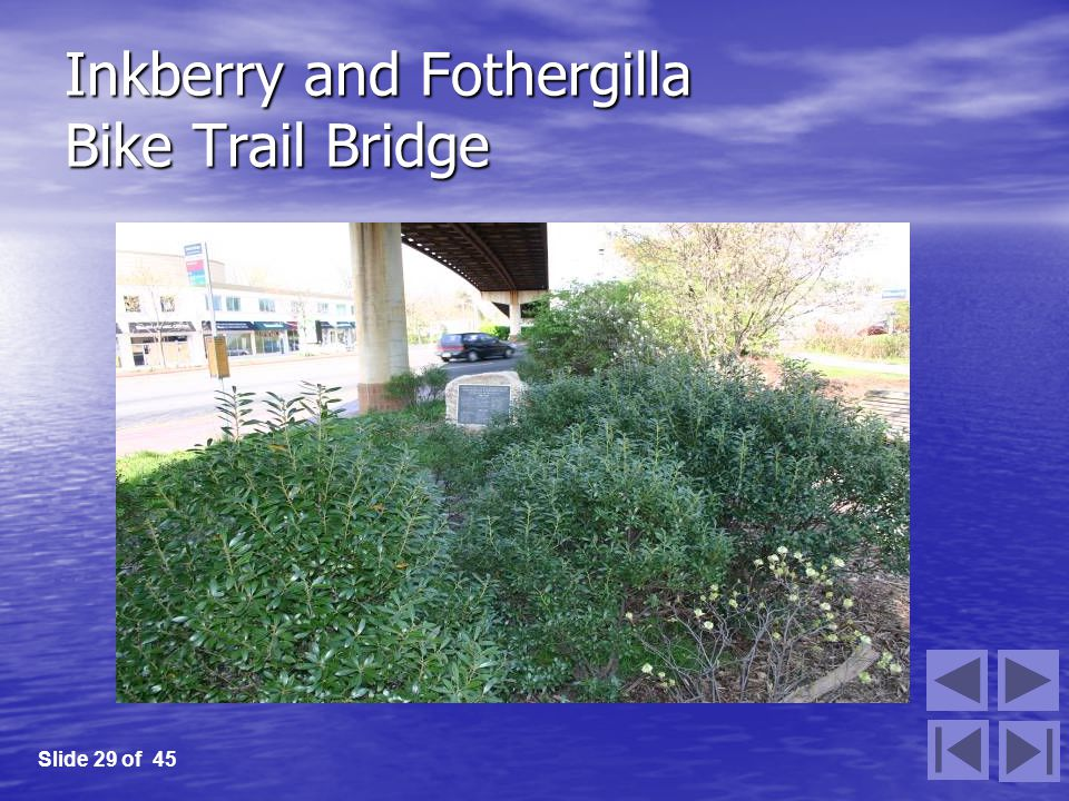 Inkberry and Fothergilla Bike Trail Bridge Slide 29 of 45