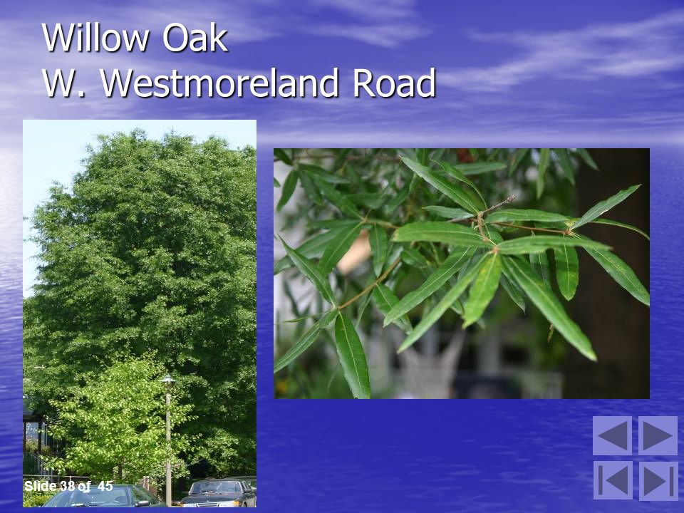 Willow Oak W. Westmoreland Road Slide 38 of 45