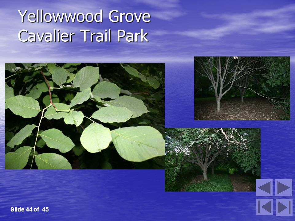 Yellowwood Grove Cavalier Trail Park Slide 44 of 45
