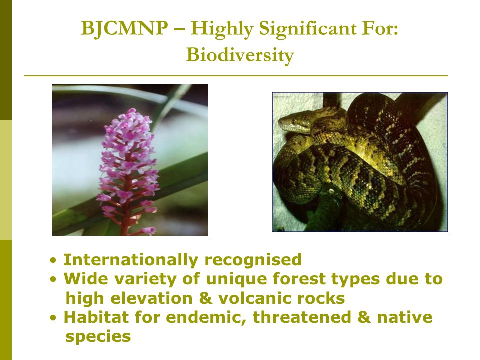 BJCMNP – Highly Significant For: Biodiversity Internationally recognised Wide variety of unique forest types due to high elevation & volcanic rocks Habitat for endemic, threatened & native species