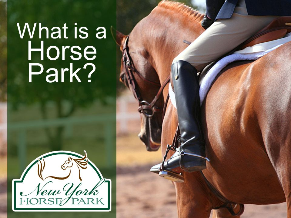 Make the dream real.Please visit us on the web at www.nyhorsepark.org Thank you.