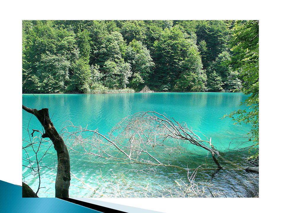 Kopački rit – a swamp area at the river mouth of the river of Drava (Croatian: Drava)