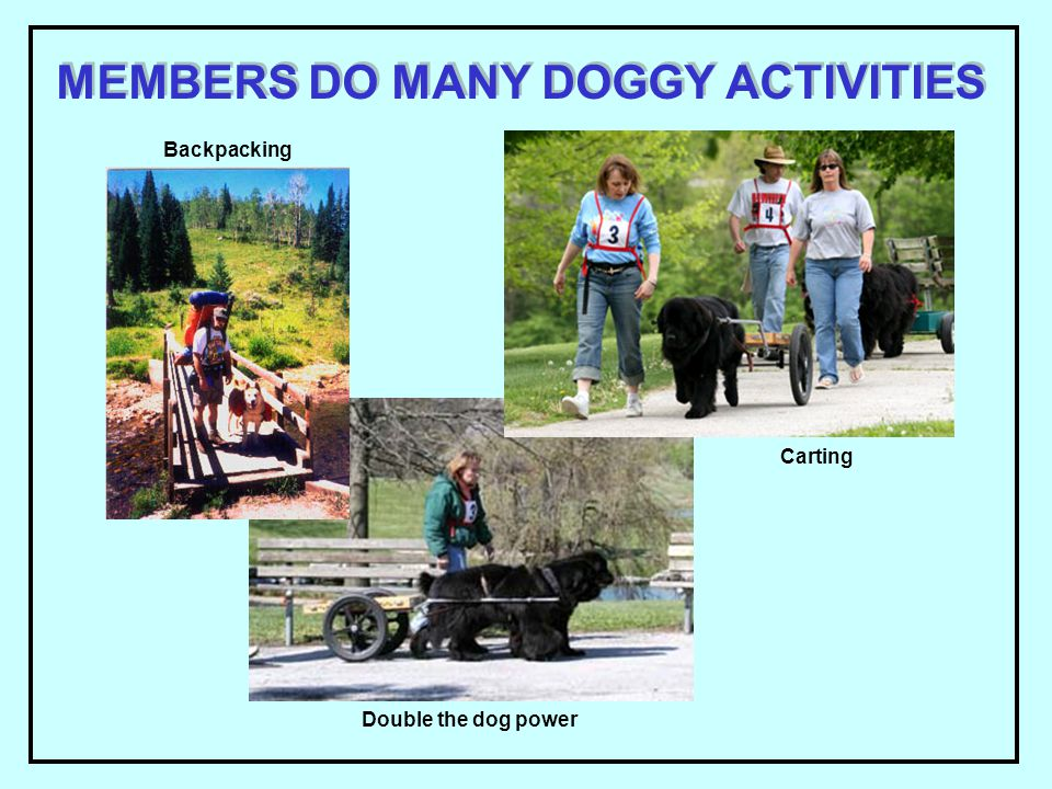 MEMBERS DO MANY DOGGY ACTIVITIES Backpacking Carting Double the dog power