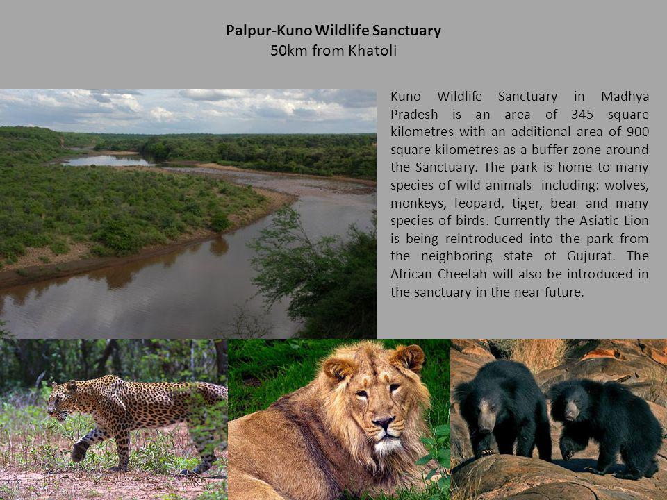 Palpur-Kuno Wildlife Sanctuary 50km from Khatoli Kuno Wildlife Sanctuary in Madhya Pradesh is an area of 345 square kilometres with an additional area