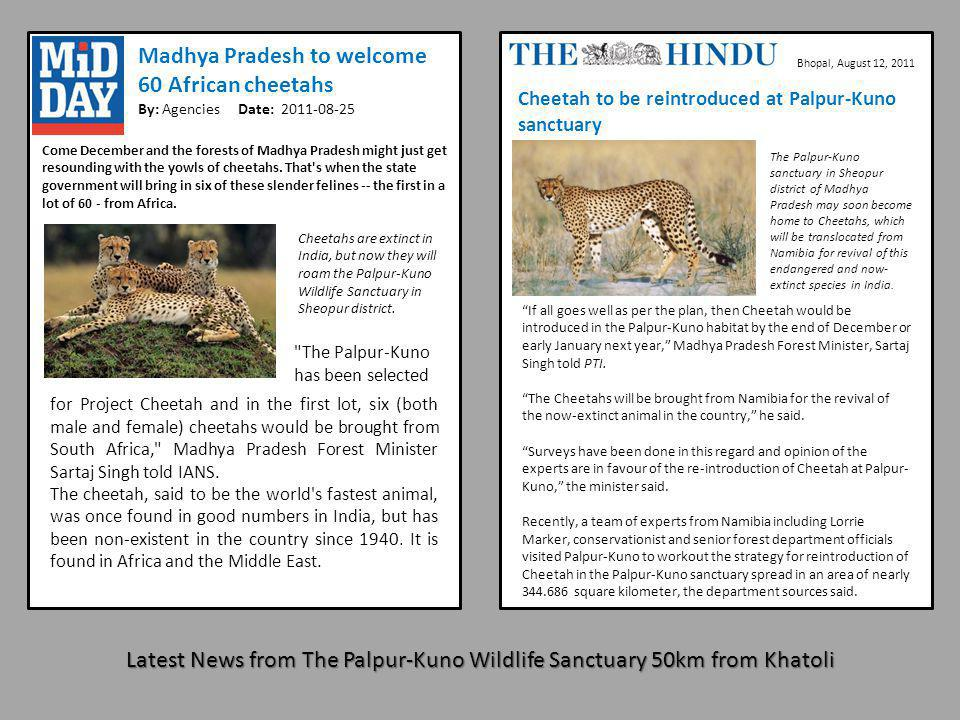Madhya Pradesh to welcome 60 African cheetahs By: Agencies Date: 2011-08-25 Come December and the forests of Madhya Pradesh might just get resounding