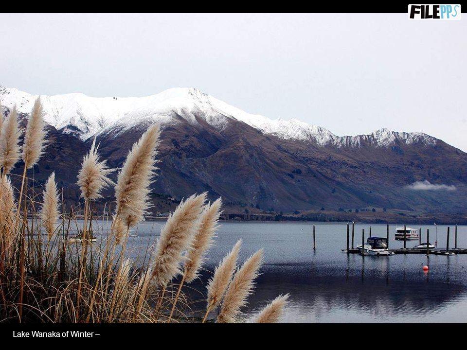 Lake Wanaka of Summer –