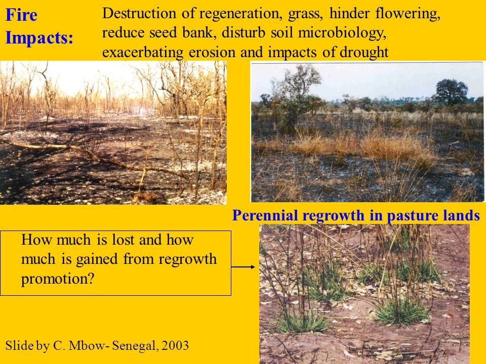 Tanzania - Forest & Beekeeping Dept.– Mini.