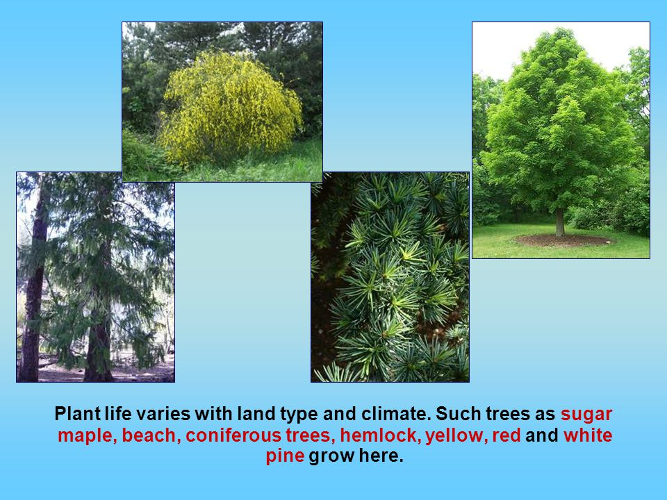 Plant life varies with land type and climate.