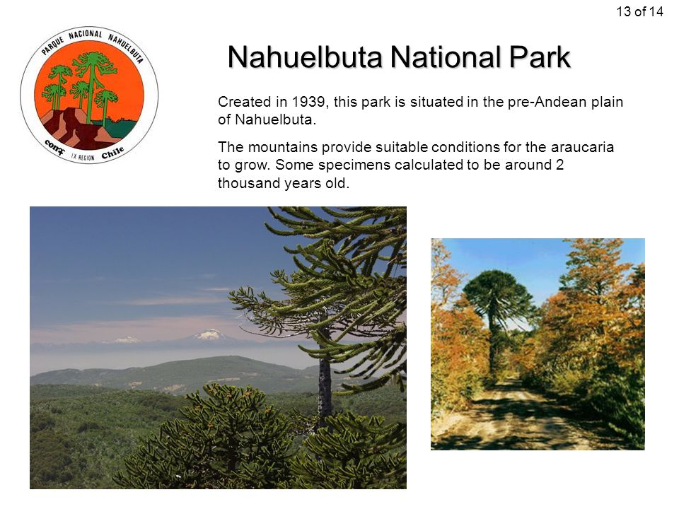Nahuelbuta National Park Created in 1939, this park is situated in the pre-Andean plain of Nahuelbuta. The mountains provide suitable conditions for t